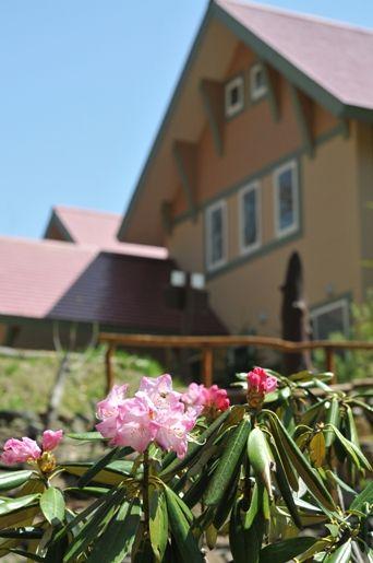 石楠花が咲きました