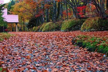 今日の草津温泉は・・・赤い絨毯