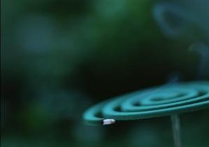 蚊取り線香