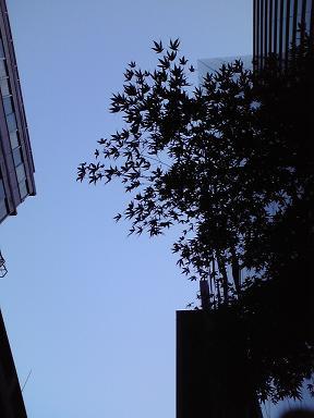 20091127朝の銀座三丁目