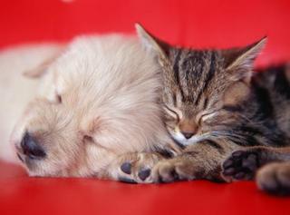 子犬と子猫の寝顔