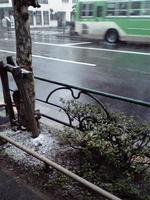 20100218早朝都心の雪