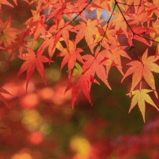 岡山の紅葉