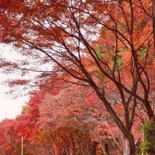 岡山 高梁 弥高山公園