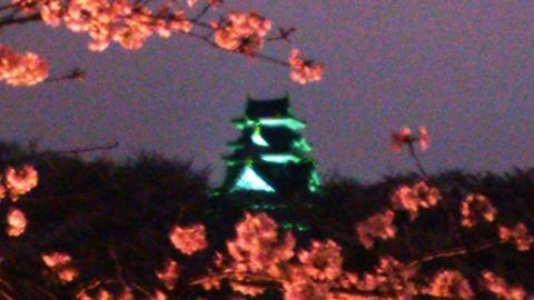 岡山城 と 夜桜DSC_1760