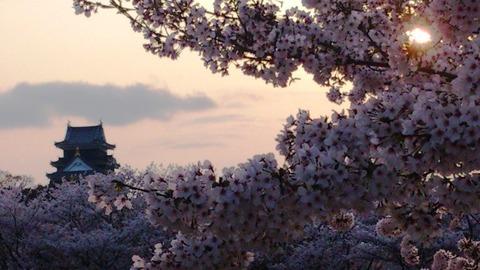 岡山城 と 桜 夕日DSC_1787 - コピー
