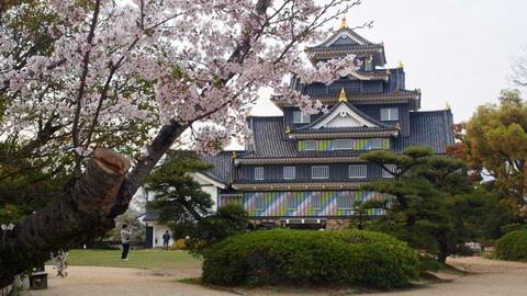 岡山城 ポップ 桜DSC_1934 - コピー
