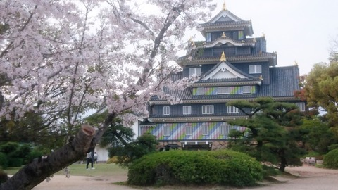 岡山城 ポップ さくらDSC_0677 のコピー
