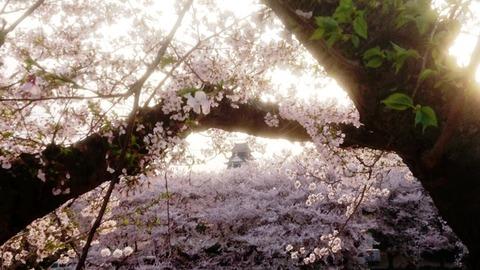 岡山城 桜 枠DSC_0389 - コピー