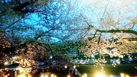 おかやま さくらカーニバル 夜桜DSC_0461 - コピー
