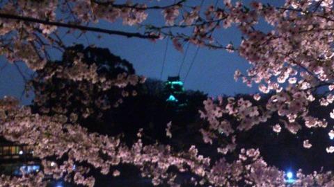 岡山城 夜桜 交信DSC_1897