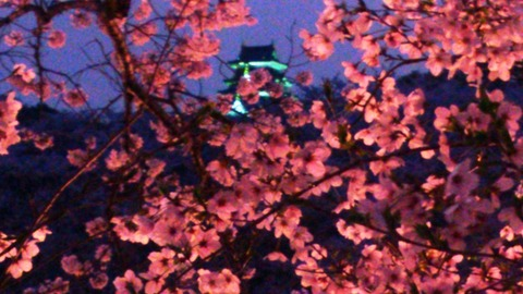 岡山城 と 夜桜DSC_1687