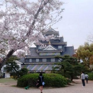 岡山城とさくら DSC_0665 - コピー - コピー のコピー