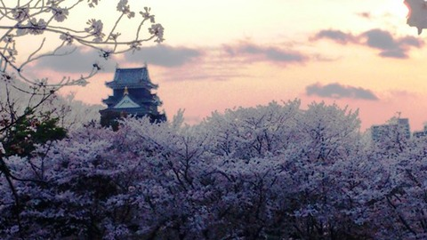 岡山城 と 桜 夕暮れDSC_1819