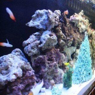 クリスマス島の魚水槽