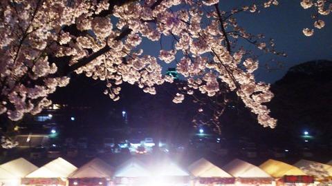 おかやま サクラカーニバル 夜桜DSC_1845