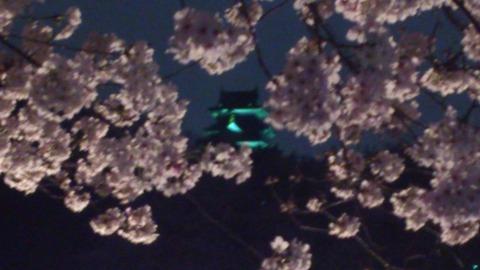 岡山城と夜桜DSC_1850