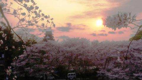 さくらカーニバル 夕日 岡山城DSC_0560 - コピー