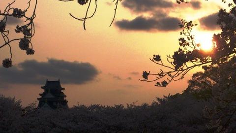 岡山城 と 桜 夕日DSC_1762 - コピー