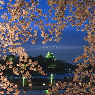 岡山城 と桜 ライトアップ