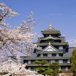 岡山城と桜02