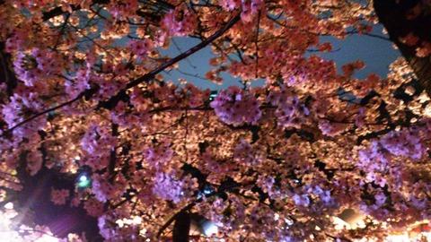 おかやまさくらカーニバル 夜桜DSC_1874