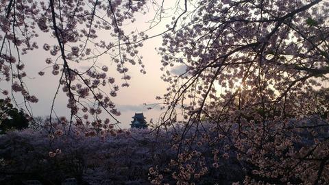 岡山城 と 桜 と 夕日 DSC_1753 - コピー
