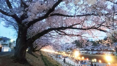 桜カーニバル と 夜桜へDSC_0397 - コピー