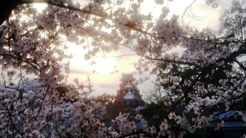 岡山城 さくら 枠 夕日DSC_0577 - コピー (2)