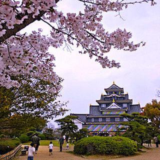 岡山城 マスキングテープ 桜