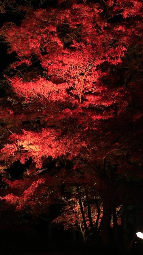 bb 岡山の秋