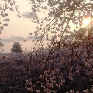 岡山城 桜 夕日 ベストDSC_0424 2