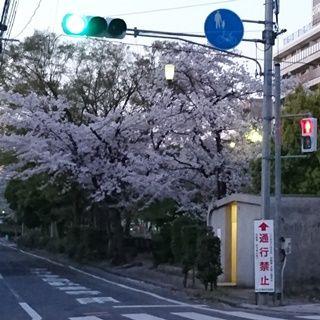 西川緑道公園 散歩道002 L ss