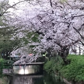 西川緑道公園 散歩道007 L ssaa