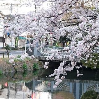 西川緑道公園 散歩道008 L ss