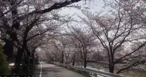 賀茂川沿い