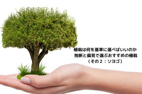 おすすめの植栽_2