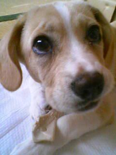 松田瑠華「この犬は。。。。」