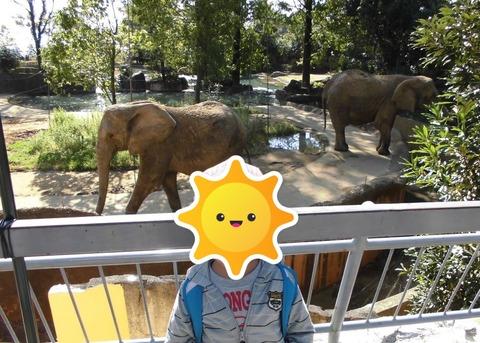 八木山動物園1