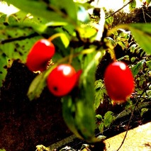 181014 山野草のエキ (37)