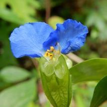 170902 鹿野の花  (9)