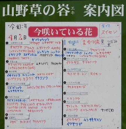 200402 山野草のエキ (122)
