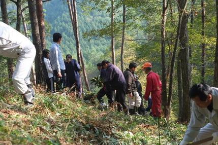 161106 シャクナゲの植樹祭