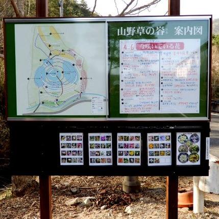 180410 山野草のエキ  (37)