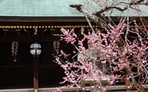 190326 京都 2 北野天満宮  (22)
