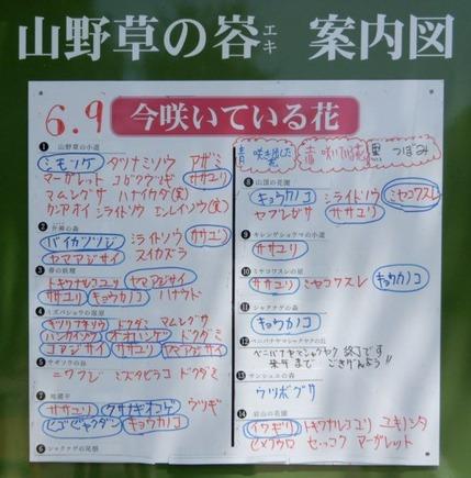 180609 山野草のエキ (51)-1