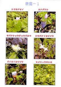 二所山田神社表庭の花4月初めー1