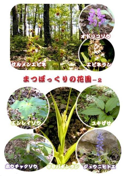 2018・5・22岩手県雫石町まつぼっくりの花園2−1