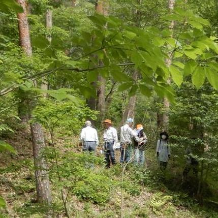 200603 山野草のエキ ボランティア (12)