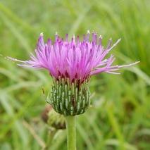 170904 田圃の花 (13)